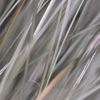 Celia-Pearson-6.-Grasses-I