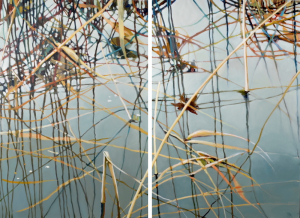 MDR-Diminuendo-I-and-II-diptych2