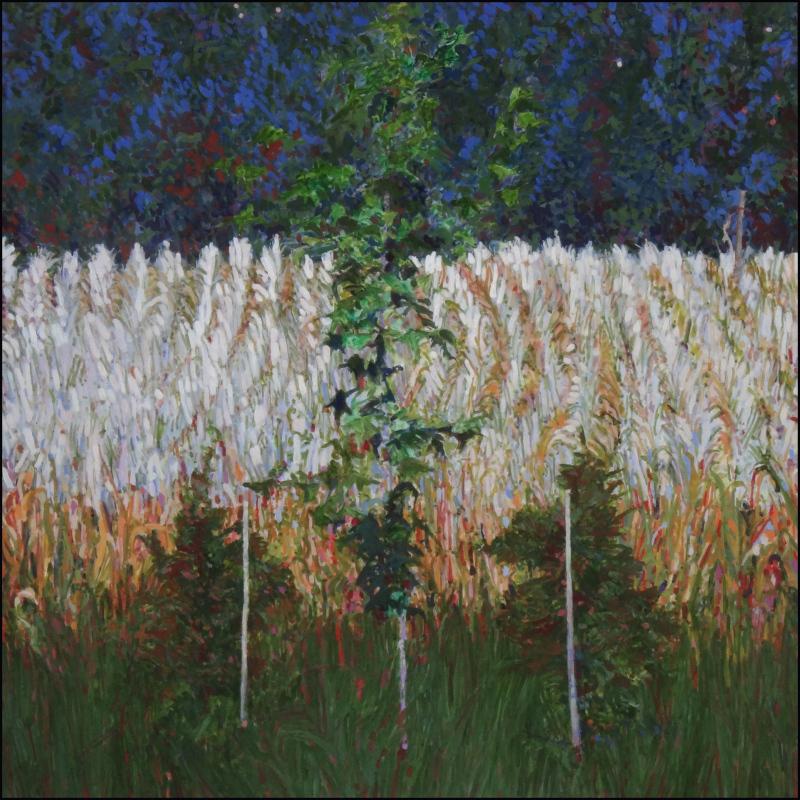 County Trees - Corn Tassels